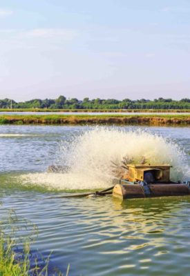 Electric Aerators on Catfish Farm- Delta Business Journal
